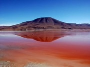 bolivie-sud-lipez-laguna-colorada